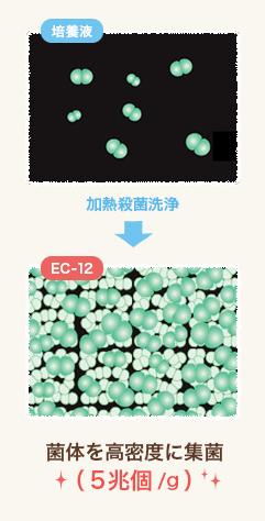 EC-12は、乳酸菌の数と質が違います