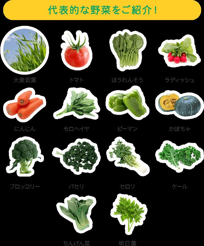 代表的な野菜をご紹介!